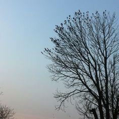 #100happydays day 94. Boom met vogelblaadjes. Het geritsel klinkt als gekwinkeleer.