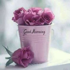 In today's post, we are presenting good morning msg. If you are searching for good morning msg you are welcome to our website. Good Morning Beautiful Flowers, Good Morning Images Flowers, Good Morning Roses, Good Morning Beautiful Quotes, Good Morning Images Hd, Morning Pictures, Good Morning Thursday, Good Morning Msg, Good Morning Cards