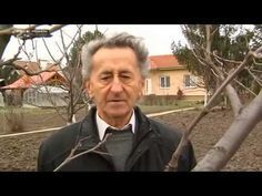 Jak správně ostříhat ovocný strom - YouTube Gardening For Beginners, Gardening Tips, Fruit Plants, Animals And Pets, Garden Design, Life Hacks, Pergola, Youtube, Outdoors
