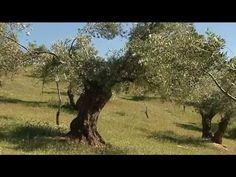 El secreto del mejor aceite...se esconde en la Red Natura jiennense