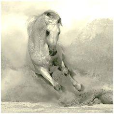 Koń w galopie