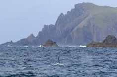 Image result for coast of ireland