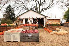 love roadside farm stands