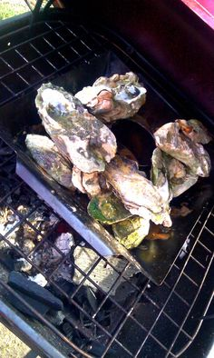 Custom Oyster Knives Smoking Blue Point Oysters Are A Winning Combination Seafood Bbq, Fat Daddy's, Fairs And Festivals, Blue Point, Oysters, Barbecue, Christmas Holidays, Catering, Grilling