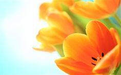... é primavera, te amo!!!!...