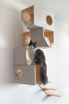 Geometrical Wooden Cat Tree Catissa imagines furniture for cats. One of their creations is a cat tree with geometrical shapes that can be fixed on the wall. Cat Playground, Playground Design, Wooden Cat Tree, Diy Pet, Animal Gato, Cat Condo, Dogs And Kids, Pet Furniture, Furniture Dolly