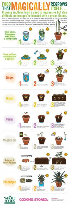 Use kitchen scraps to grow plants! Yes a lot of foods you disregard as not edible and/or trash can in fact grow into a plant and give you more fruits and vegetables! It is an alternative way of growing a vegetable garden then growing from seed or buying a bunch of plants.