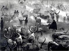 GENESIS, Sebastiao Salgado ... Herdsmen driving their cattle into a camp in southern Sudan