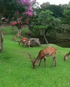 Whitetail Deer Pictures, Deer Photos, Cute Baby Animals, Animals And Pets, Funny Animals, Amazing Animal Pictures, Funny Animal Pictures, Most Beautiful Animals, Beautiful Creatures