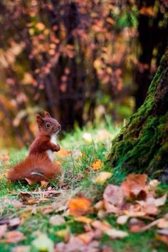 squirrel by empty field Forest Animals, Nature Animals, Animals And Pets, Baby Animals, Funny Animals, Cute Animals, Beautiful Creatures, Animals Beautiful, Beautiful Nature Pictures
