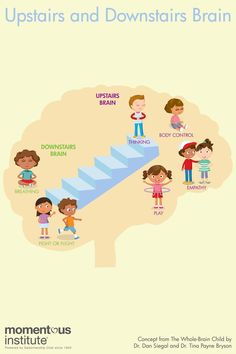 """As we work with children, we need to continually ask ourselves, """"Am I engaging the upstairs brain, or am I triggering the downstairs brain? The Brain For Kids, Whole Brain Child, Yoga For Kids, Social Skills Activities, Speech Therapy Activities, Brain Activities, Articulation Activities, Inside Out Emotions, Brain Based Learning"""