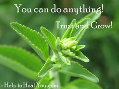 #helptohealyou #trust #grow You Can Do Anything, Trust, Healing, Herbs, Herb, Recovery, Spice