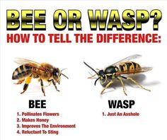 is it a bee or wasp