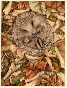valerie greeley does such beautifully delicate & detailed decorative illustration Amor Animal, Mundo Animal, Animals And Pets, Baby Animals, Cute Animals, Wild Animals, Beautiful Creatures, Animals Beautiful, Animal Original
