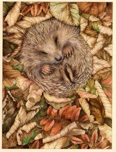 Valerie Greeley - DTL23 Hedgehog  asleep.jpg