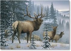 Wildlife Christmas Cards.60 Best Greetings Leanin Tree Cards Images In 2019