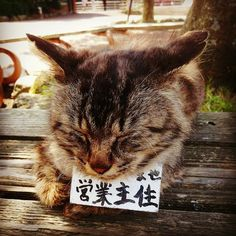 Photo by Eiji Imoto on EyeEm
