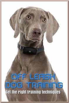 Dog Training –Training For Proper Dog Behavior Off Leash Dog Training, Dog Training Tips, Train Information, Real Dog, Different Dogs, Aggressive Dog, Wild Dogs, Dog Show