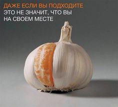 Ne každé místo, kam zapadneš, je to. Best Memes, Funny Memes, Funny Shit, Pinterest Memes, More Than Words, Good Mood, Life, Private Facebook, Garlic Clove