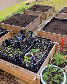Keeping seedlings warm on raised beds with warm compost.