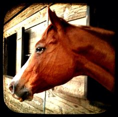 Kay is an American Quarter Horse