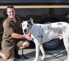 this ups driver saved this dog from starvation and abuse, all because he saw him in his ups route