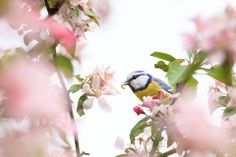 the most beautiful garden of a blue tit