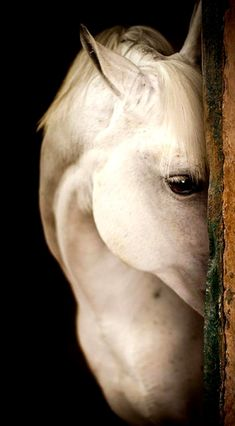 Beautiful royal Horse Photography