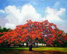 Cuban Art Painting - Flamboyan by Jose Manuel Abraham Delonix Regia, Crayons Pastel, Fine Arts School, Flame Tree, Cuban Art, Arte Floral, Flowers Perennials, Flowering Trees, All Art