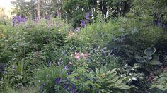 Herra Hemulin puutarha
