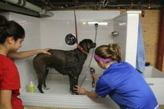 How to build a dog wash station grooming salons pinterest dog how to build a dog wash station aconcordcarpenter solutioingenieria Gallery