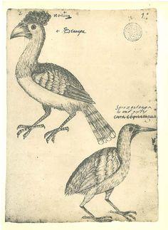 Vintage Birds Sketch Drawing  Maranhao  Brazil Frei by carambas