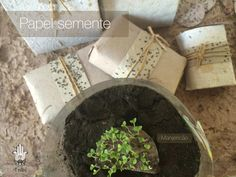 Papel semente com 7 dias de geminação.