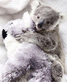 b09705b25441 fac16fffd20d66af7394c121f779a6b4--baby-koala-koala-bears.jpg