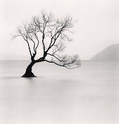 Michael Kenna- Wanaka Lake Tree, Study 1, New Zealand 2013