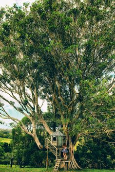 ◈ Dress - Armani ◈ We found this tree house on our way from Nimbin to Byron Bay one grey...