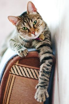 """To you it may look like a beautiful new chair.  To your cat, it is another scratch post."" --Author Unknown"