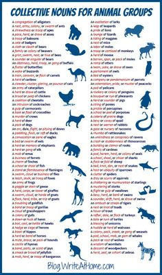 Collective Nouns Animal Group Names