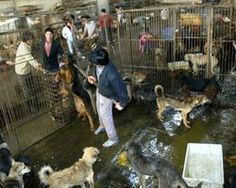 Sign and share!!  We demand an EU embargo on China - The Petition Site http://www.thepetitionsite.com/251/460/189/we-demand-eu-embargo-on-china/