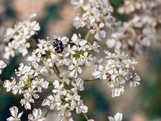 Flowering time #macro #nature #flowers #summer #blooming