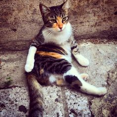 One of #Istanbul's many cats.