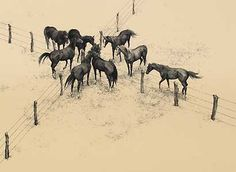 Four Corners...lithograph...Bev Doolittle