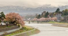 During cherry blossom season, viewed from one of many rivers that divide Kanazawa with a snowed mountain range at the background. Kanazawa, Japan.