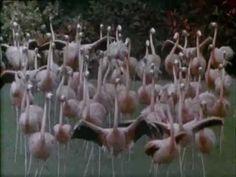 Jan Hammer - Original Miami Vice Theme ( Miami Vice Tribute video by Ste...
