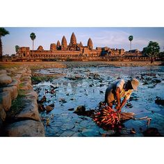 "53.3k Likes, 198 Comments - Steve McCurry (@stevemccurryofficial) on Instagram: ""A man harvests lotus flowers at Angkor Wat temple, Angkor, Cambodia. Lotus flowers symbolize purity…"""