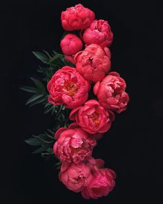 """To have ideas is to gather flowers; to think is to weave them into garlands. Wallpaper Flower, Wallpaper Nature Flowers, Beautiful Flowers Wallpapers, Of Wallpaper, Peony Flower, My Flower, Dahlia, Flower Power, Peony Plant"