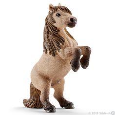 Mini Shetty stallion