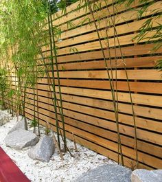 Love bamboo against a modern hortizonal fence