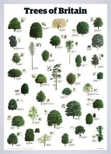 Trees of Britain by Guardian Wallchart - Framed Art