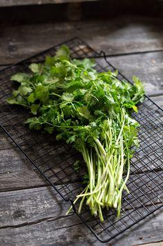 """cilantro-koriander zöld """"A gyomor- és béltraktus kiváló gyógynövénye. Az ó egyiptomiak a boldogság fűszerének tartották"""""""